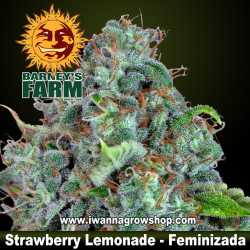 Strawberry Lemonade – Feminizada