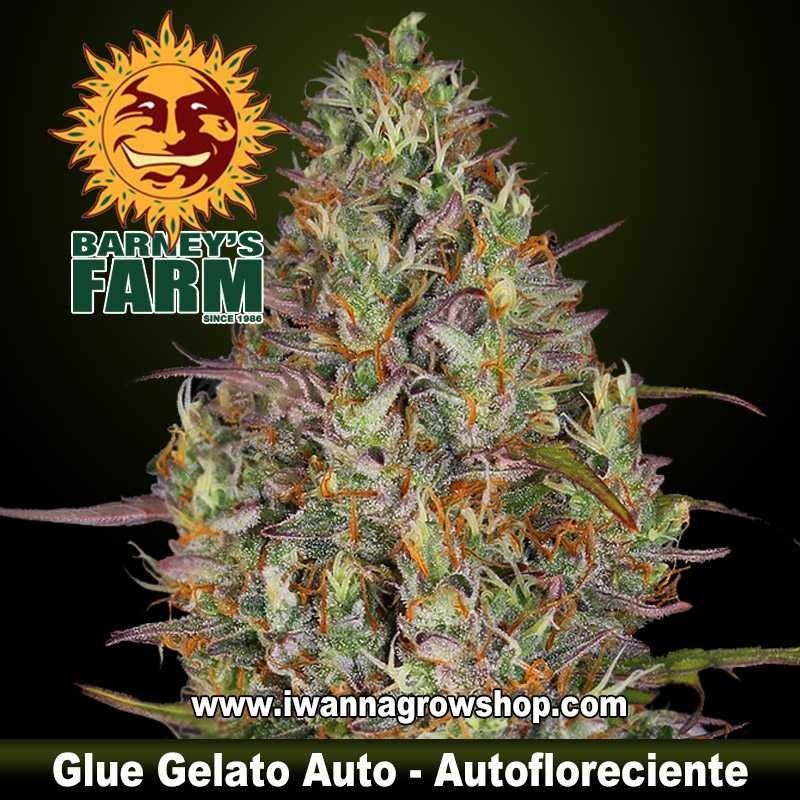 Glue Gelato Auto