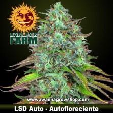 LSD Auto – Autofloreciente