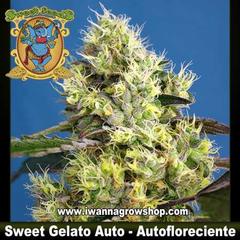 Sweet Gelato Auto