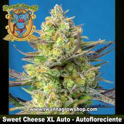 Sweet Cheese XL Auto – Autofloreciente