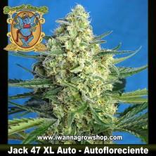 Jack 47 XL Auto – Autofloreciente