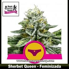 Sherbet Queen – Feminizada
