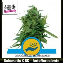 Solomatic CBD – Autofloreciente