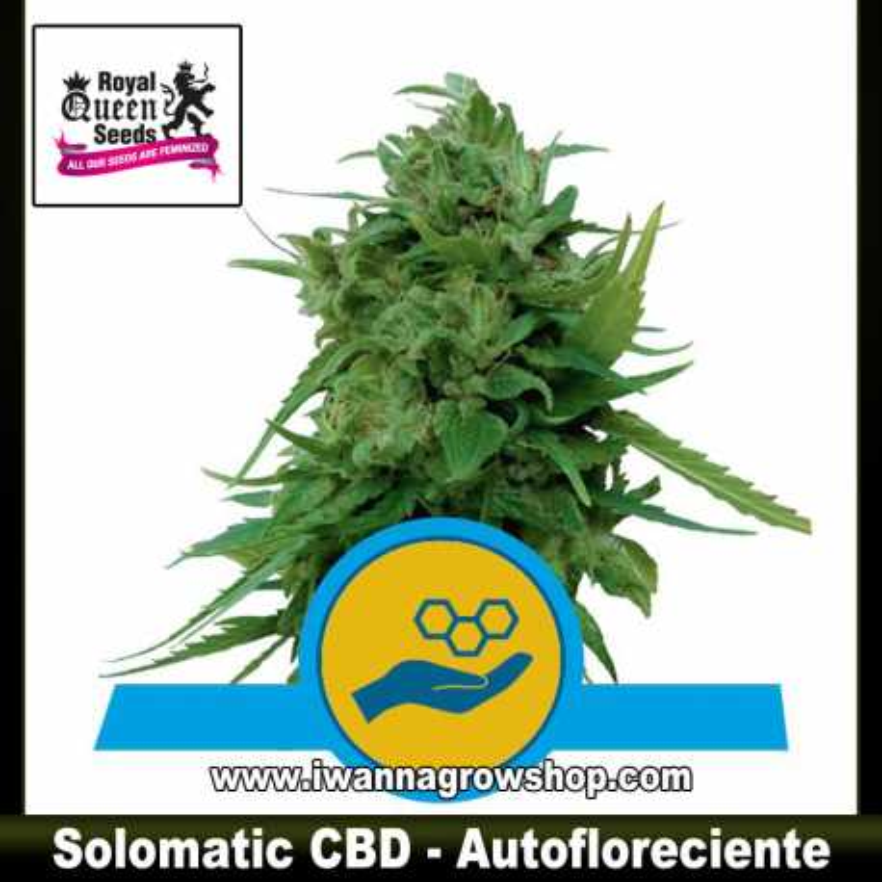 Solomatic CBD