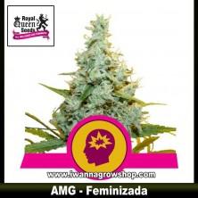 AMG – Feminizada