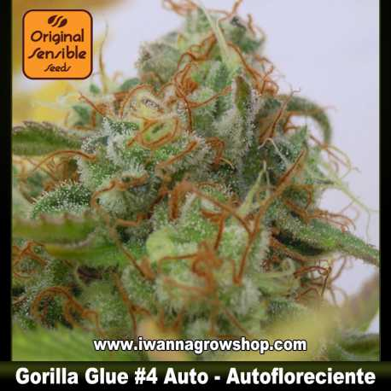 Gorilla Glue 4 Auto