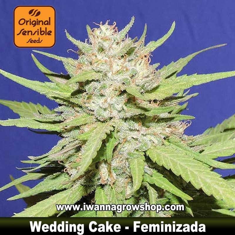 Wedding Cake – Feminizada