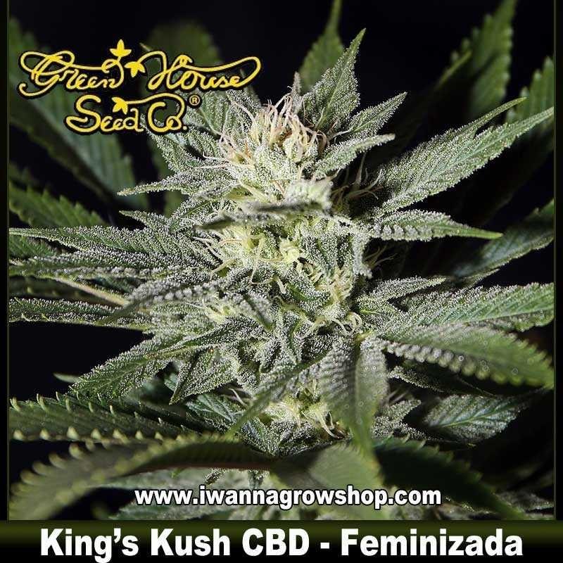 King's Kush CBD