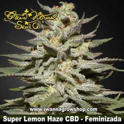 Super Lemon Haze CBD – Feminizada