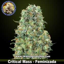 Critical Mass – Feminizada