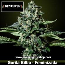 Gorila Bilbo