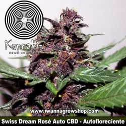 Swiss Dream Rosé Auto CBD