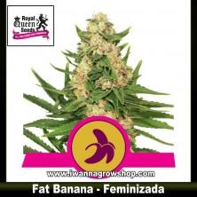 Fat Banana