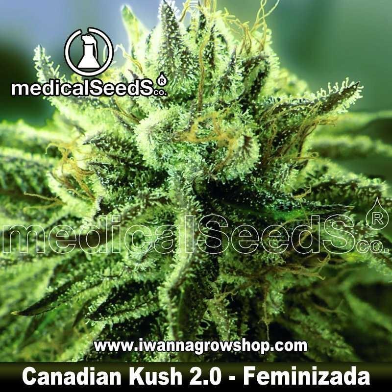 Canadian Kush 2.0