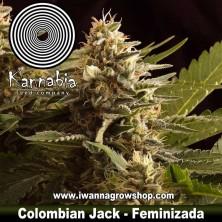 Colombian Jack