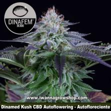 Dinamed Kush CBD Auto