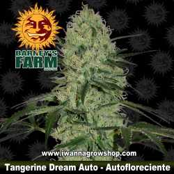 Tangerine Dream Auto
