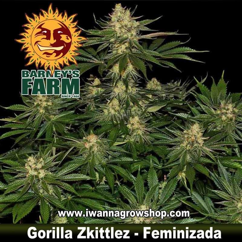Gorilla Zkittlez