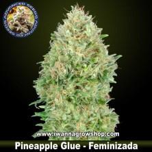 Pineapple Glue