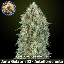 Auto Gelato 33