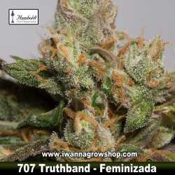 707 Truthband by Emerald Mountain