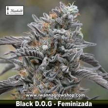 Black D.O.G.