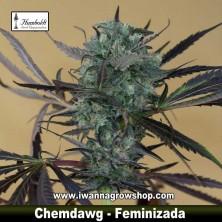 Chemdawg