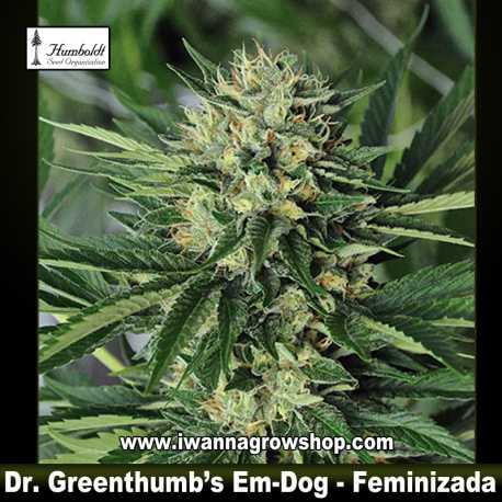 Dr Greenthumbs's Em-Dog by B-Real