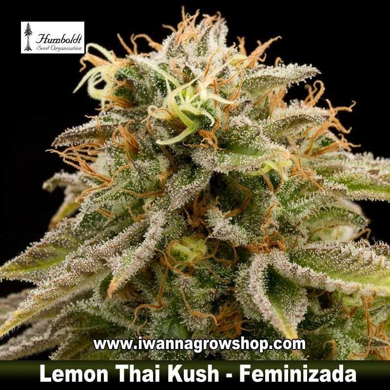 Lemon Thai Kush