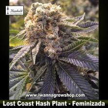 Lost Coast Hash Plant