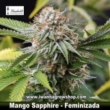 Mango Sapphire