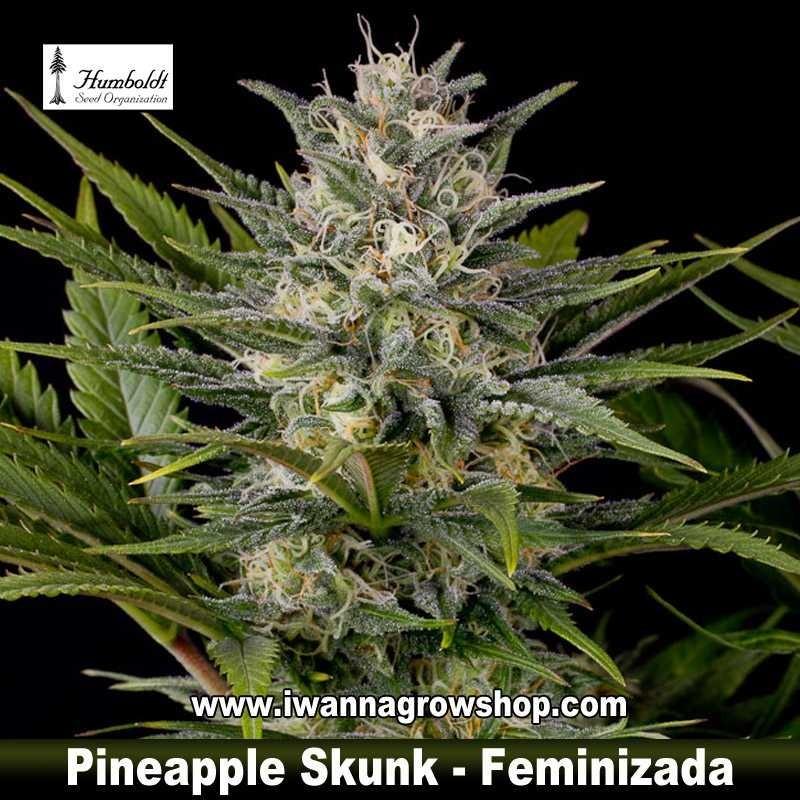 Pineapple Skunk