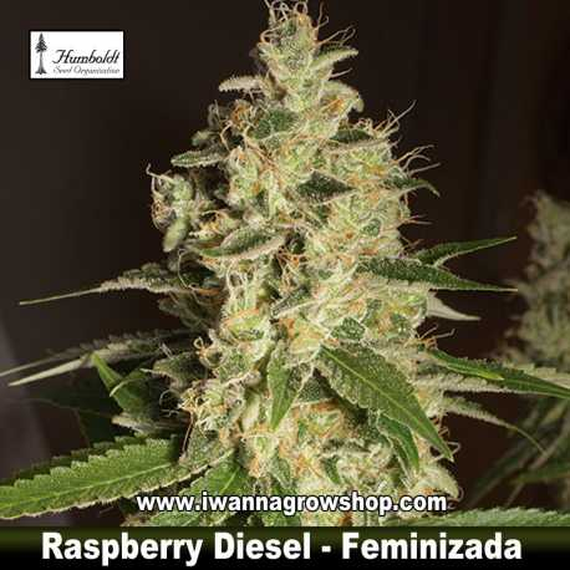 Raspberry Diesel