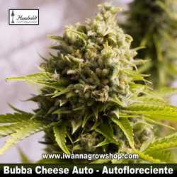 Bubba Cheese Auto