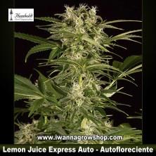 Lemon Juice Express Auto