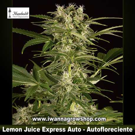 Lemon Juice Express Auto
