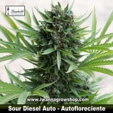 Sour Diesel Auto