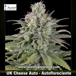 UK Cheese Auto