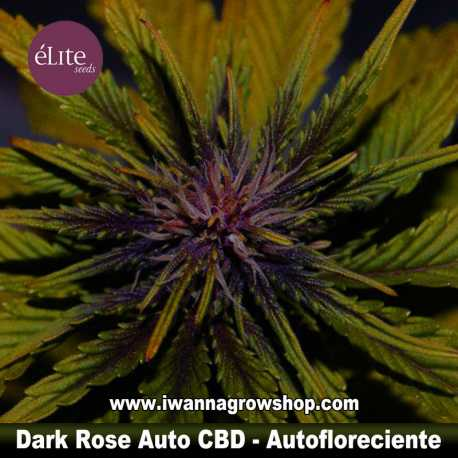 Dark Rose Auto CBD