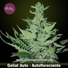 Goliat Auto