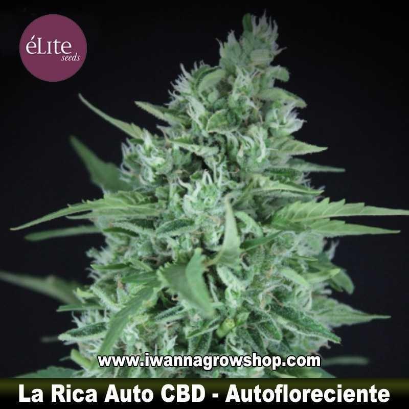 La Rica Auto CBD