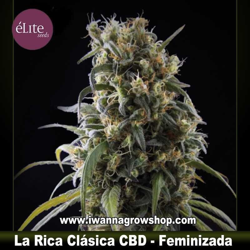 La Rica Clásica CBD