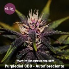 Purplediol Auto CBD
