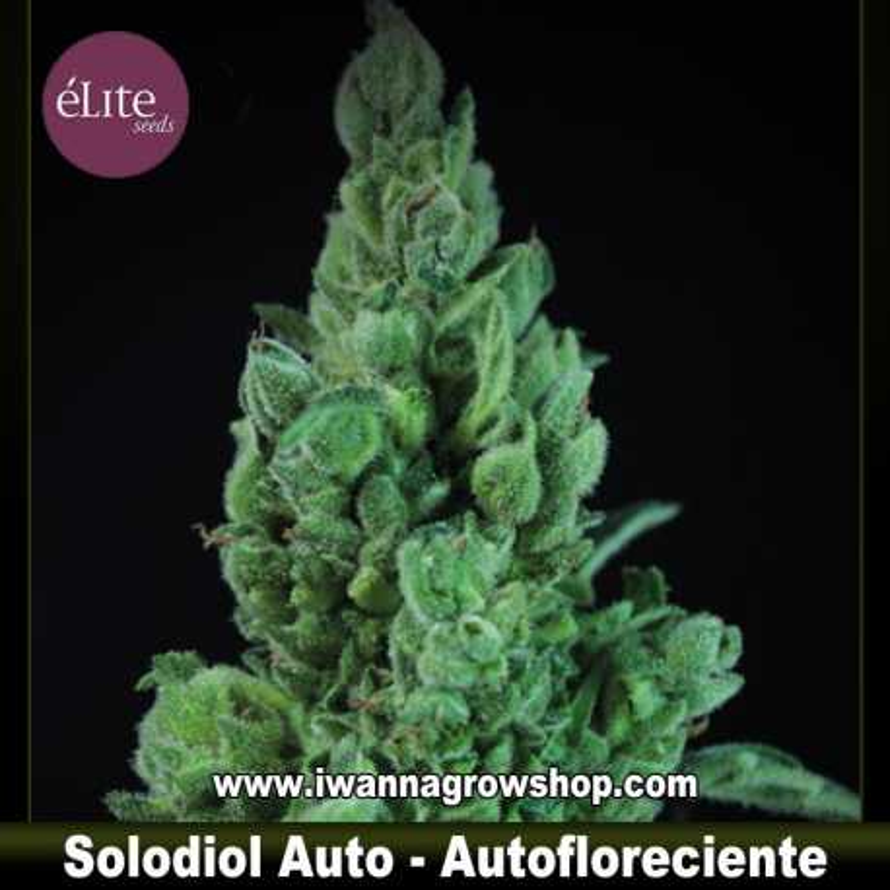 Solodiol Auto CBD