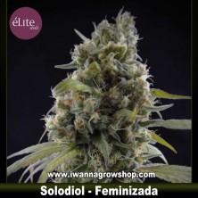 Solodiol Clásica CBD