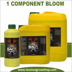 Component Bloom