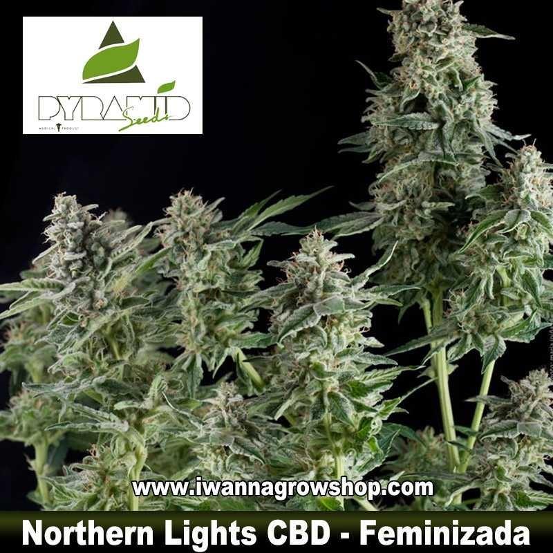 Northern Lights CBD