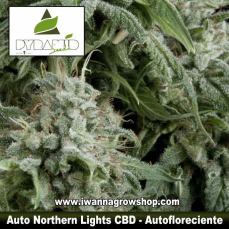 Auto Northern Lights CBD