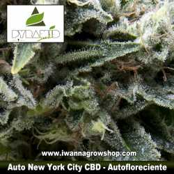 Auto New York City CBD